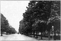 Photo of Street Trees, Washington, D. C.