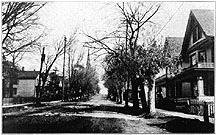 Photo of Street Trees, Main Street, Madison