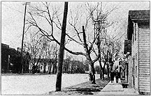 Photo of Street Trees, University Avenue, Madison