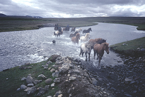 Color photo of horses at ford, larger version.