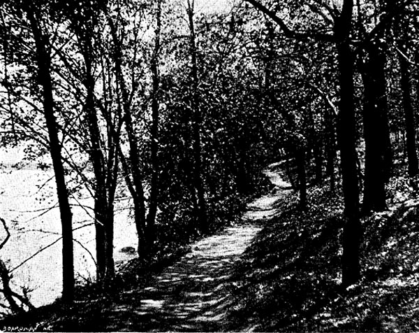 Image of A WOODLAND PATH